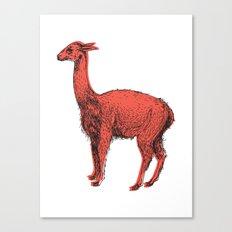 vicuña Canvas Print