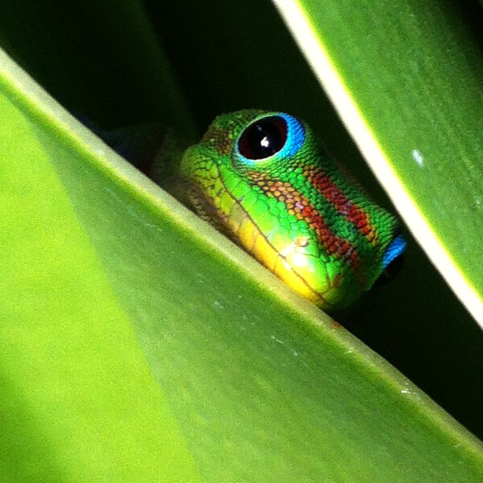 Eyes in the Grass Comforters