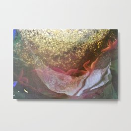 Sea stars and mussels around the pole in low tide Metal Print