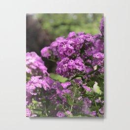 Butterfly Pink Flower in Butchart's Garden Metal Print