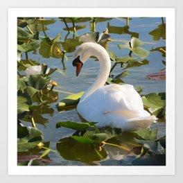 Sweet Swan Art Print