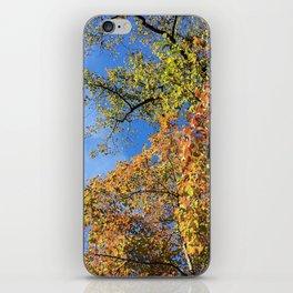 Changing Leaves at Biltmore iPhone Skin