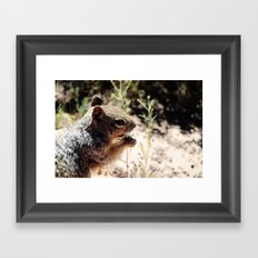 Grand Canyon Squirrel Framed Art Print