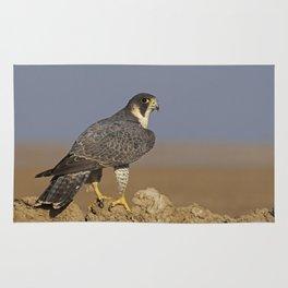 Falcon Scape Rug