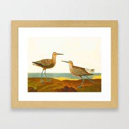 Long-legged Sandpiper Bird Framed Art Print