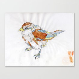 Sparrow   Watercolor Drawing Canvas Print