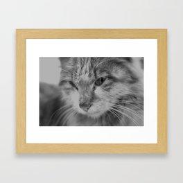 Black and White Turkish Winter Cat Framed Art Print