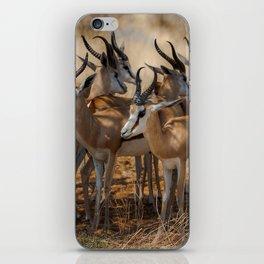 Springbok Herd iPhone Skin