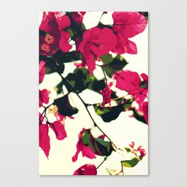 Bugambilia Santa Rita Canvas Print