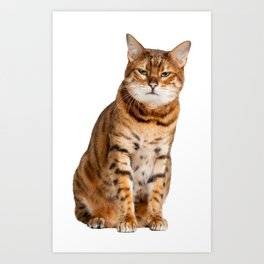 Cat looking annoyed and slightly grumpy Art Print