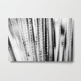 Spiky plant Metal Print