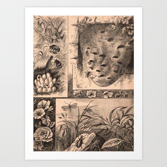 The Natural World (Vintage) Art Print