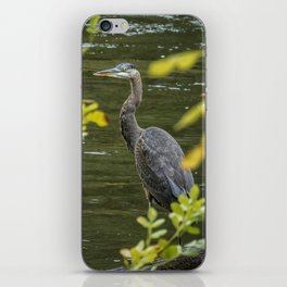 Great Blue Heron Through Autumn Leaves iPhone Skin
