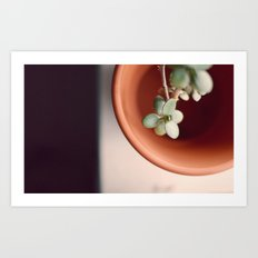 Plant in a Pot Art Print