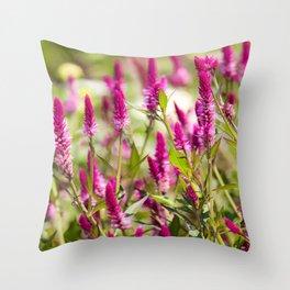 Colorful Celosia Throw Pillow