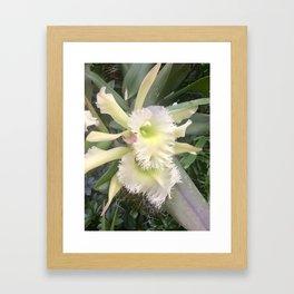 Fringe edge elegant orchids Framed Art Print