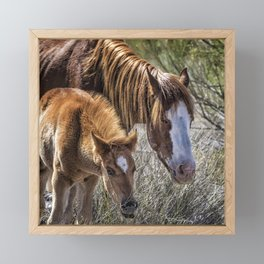 Wild Foal with Dad Framed Mini Art Print