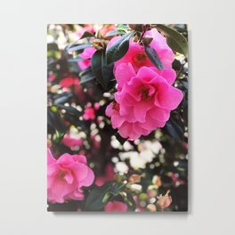 Pink flowers in Ireland Metal Print