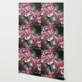 Longwood Gardens Orchid Extravaganza 77 Wallpaper