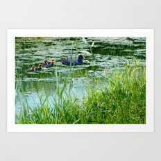 Coot with young ones Art Print