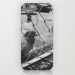 Vintage Black And White Pigeons iPhone Case