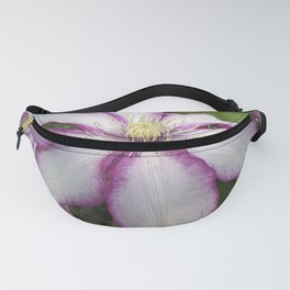 Clematis - Stunning two-tone flowers Fanny Pack