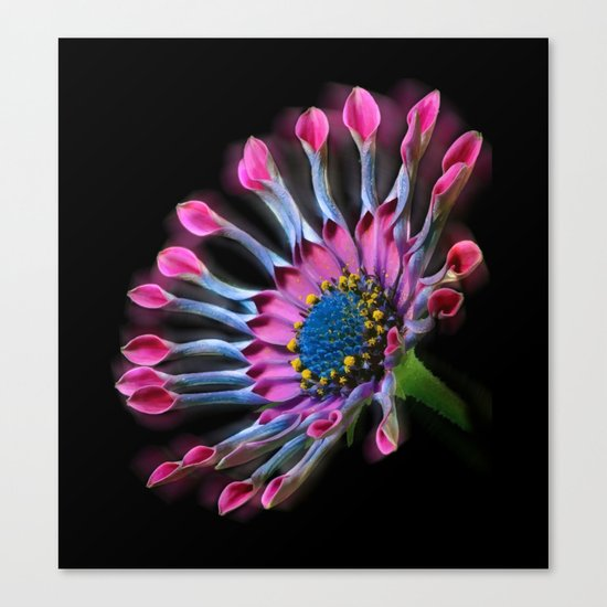 Tropical Daisy Canvas Print