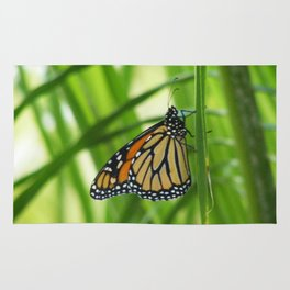 Butterfly 5 Rug
