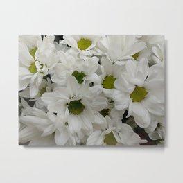 Chrysanthemum White background Metal Print