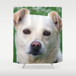 Blond dog portrait Shower Curtain