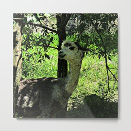 cute  alpaca Metal Print