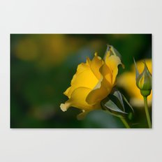 Walking On Sunshine Rose Canvas Print