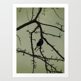 Tangled in Branches Art Print