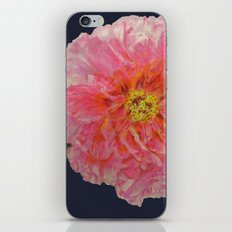 Pink Peony Flower Drawing on Blue Background iPhone & iPod Skin