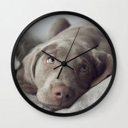 Weimaraner Puppy Love Wall Clock