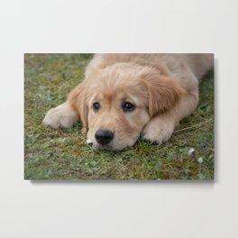 Very Cute Dog Metal Print