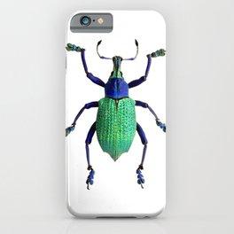 Eupholus Weevil Beetle iPhone Case