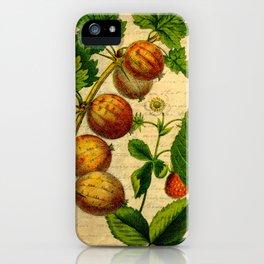 Vintage Gooseberries iPhone Case