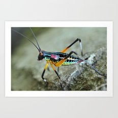 rainbow bug Art Print