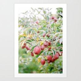 Orchard No. 2 Art Print