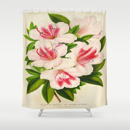 Azalea Indica Vintage Botanical Floral Flower Plant Scientific Illustration Shower Curtain