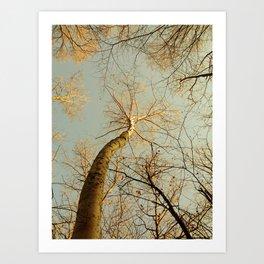 Dancing Birch Art Print
