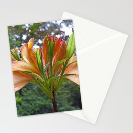 Orange Rhododendron flowers Stationery Cards