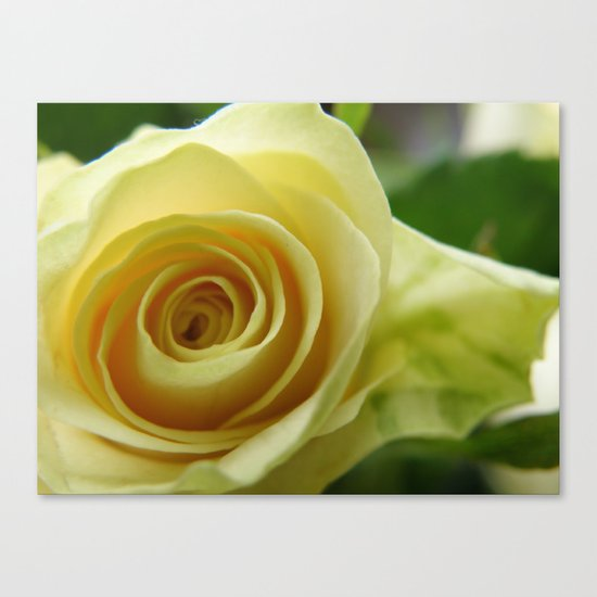 Yellow Roses #12 Canvas Print