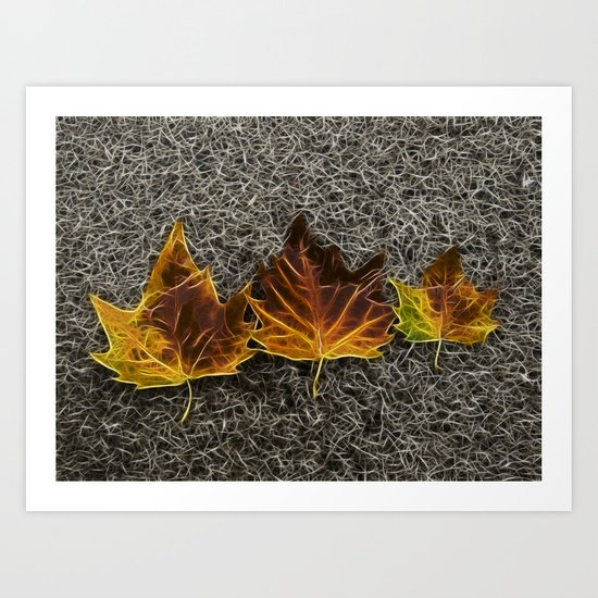 Maple on granite 3 Art Print
