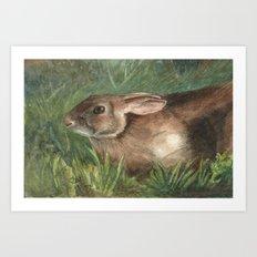 Shy Rabbit Art Print