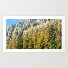 The Forest Of Colours Art Print