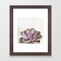 Purple Succulent Framed Art Print