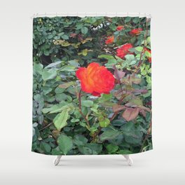 Sunset Rose #1 Shower Curtain