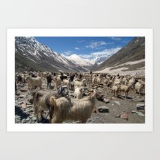 Sheep and Goats in Lahaul Valley Art Print